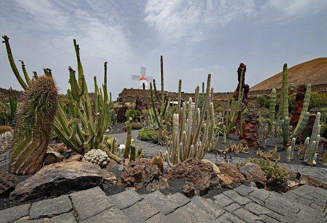 Foto del Jardin de cactus.jpg